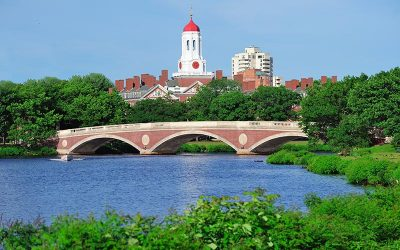 Algae Blooms and the Charles River