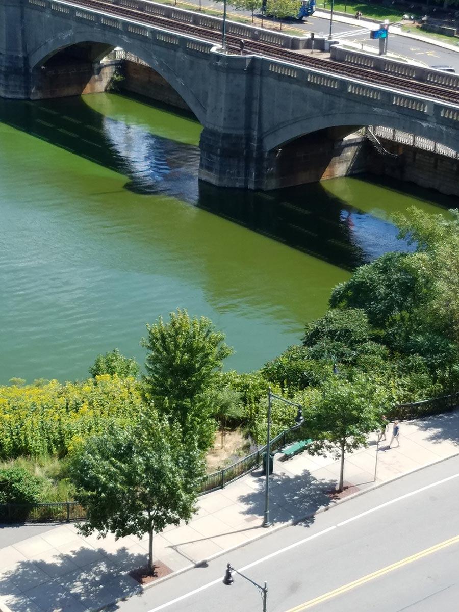 cyanobacteria on Charles River Kendall bridge August 2017