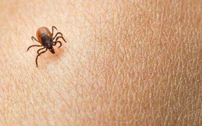 Permethrin Kills Ticks and Prevents Lyme Disease —Summer 2018