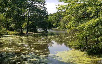 The Worst Algae Bloom on the Charles May Be 2019